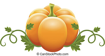 pumpkin vegetable with green leaves vector illustration...