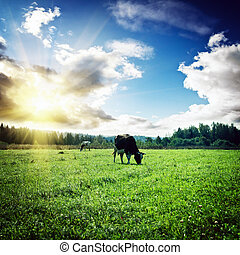 Pasture and clouds