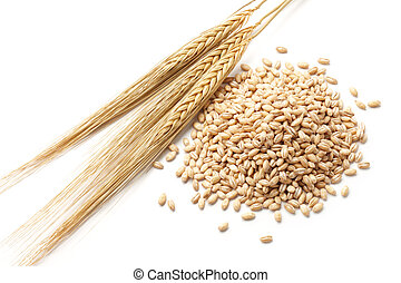 barley with grains - barley (hordeum) with pearl barley...