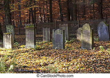 old Jewish cemetery in the oak forest