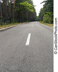 The asphalt road in forest