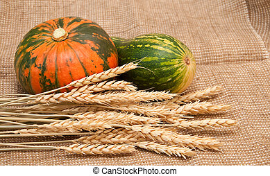 Pumpkins and wheat