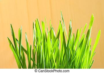 green first crops closeup
