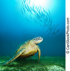 Sea turtle deep underwater with barracudas and sunlight...