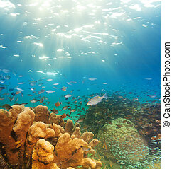 exciting underwater panorama with corals, fish schools, and...