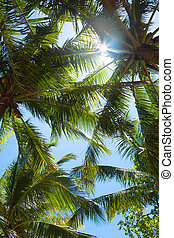 tops of palm trees in the jungle and shining sun through...