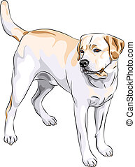 vector sketch gun dog breed Yellow Labrador Retriever -...