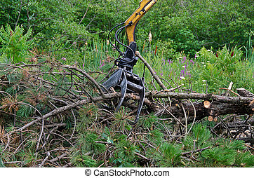 forestry equipment - Industrial equipment removing a pine...