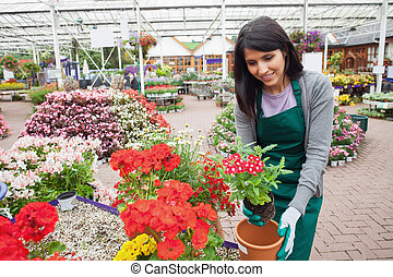 Garden center employee planting a flower in a flower pot in...