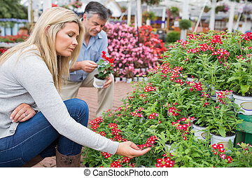 Couple looking for flowers in garden centre
