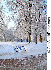wooden bench in town park