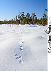hare trace on white snow