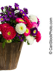 bouquet of aster flowers in pot isolated on white background...
