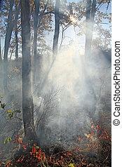 fire in oak wood