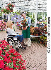 Woman in wheelchair looking at the plant