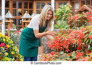 Gardener caring about flowers outdoors in garden center