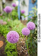 Purple flowers growing in garden