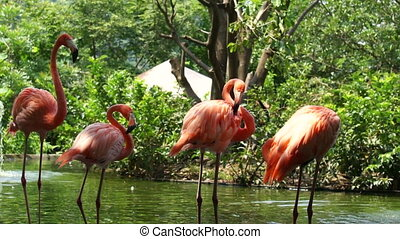 Flamingos in a pond.