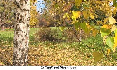 autumn landscape with birch tree
