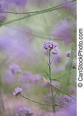 Purple flowering bush in garden