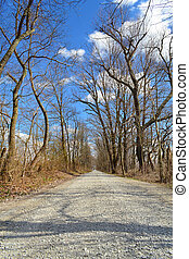 Tree Lined Gravel Road - Tree lined gravel road
