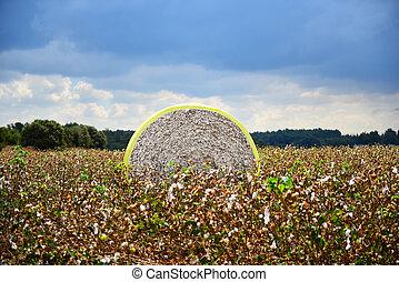 Cotton module in a field of Israel