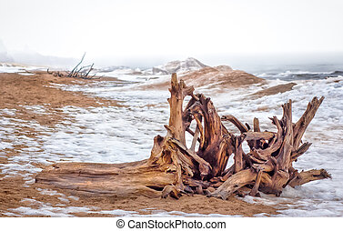 Lake Superior Driftwood - Driftwood Ashore at Minnesota...