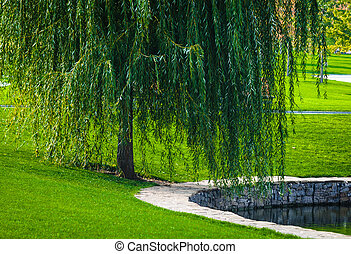 Green willow - Landscape from a park with willow near the...