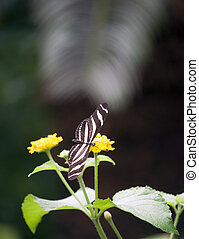 Butterfly flying around a flower, vertically, surrounded by...