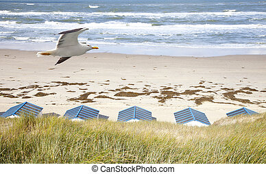 Dutch little houses on beach with seagull in De Koog Texel,...