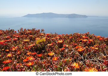 Red flowers on Santorini with sea and island in the...