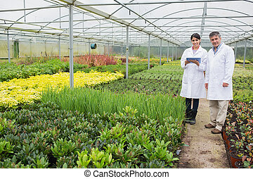 Greenhouse workers standing with tablet pc - Greenhouse...