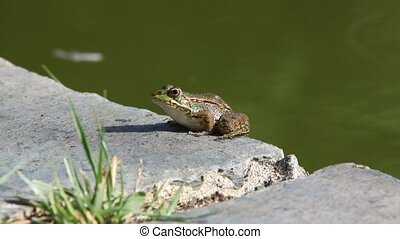 frog under the sun