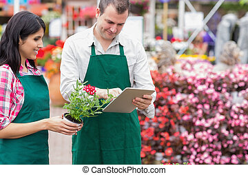 Garden center workers using tablet pc to check flowers in...