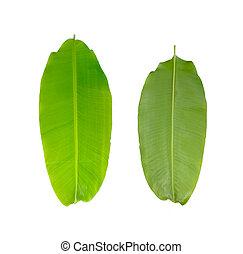 Green fresh banana leaf isolated