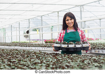 Woman carrying a box of plants working in greenhouse