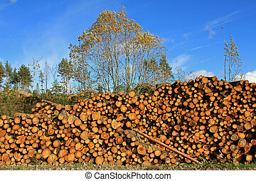 Large Pile of Wooden Logs - Large pile of wooden logs by...