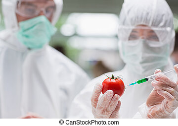 Students experimenting with a tomato in the lab wearing...
