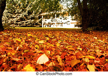 Golden Leaves - a white house with golden leaves in the yard