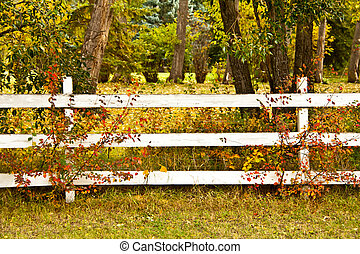 Autumn Fence - a whtie fence with trees in autumn colors