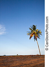 tropical landscape with palm tree
