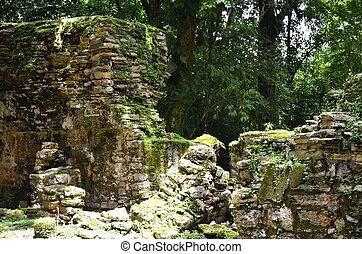 Yaxchilan - Chiapas - Mexico - 22 - Yaxchilan, Chiapas no...
