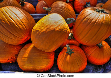 Pumpkin crate 62 - Crate of pumpkins on a sunny day in a...
