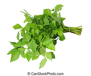 Celery - Bundle of Chinese celery isolated on white...