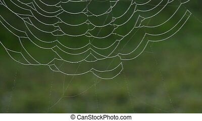Big ole spider web - Pan across a huge spider web