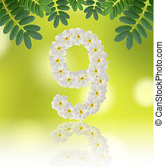 Numbers nine made of tropical flowers frangipani (plumeria) on n