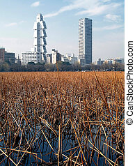 The City on the Pond - A view of the reeds in Ueno Pond with...