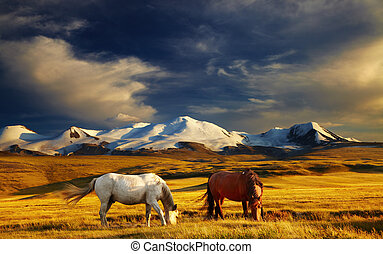 Mountain landscape - Grazing horses at sunset, plateau Ukok,...
