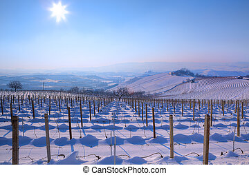 Snowy vineyards. Piedmont, Italy. - View on vineyards on...