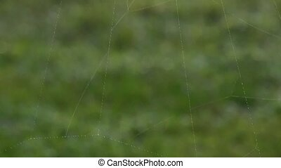 Huge spider web - Tilt move across a huge spider web dotted...